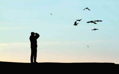 Oiseau la poésie contemplative