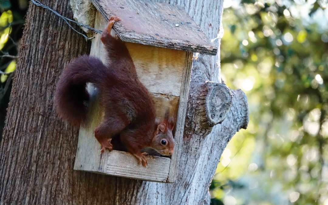 La biodiversité des Jardins de la Fontaine
