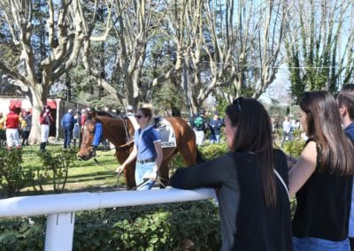 Presentation-chevaux-nimes