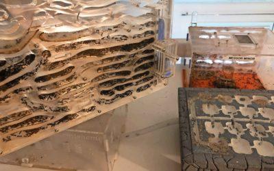 Fourmishome, des fourmis à domicile