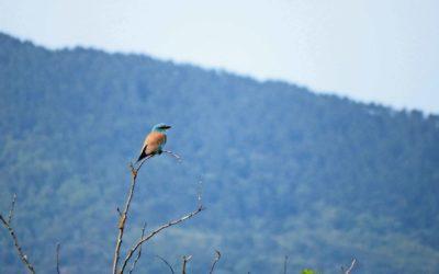 Un inventaire de la biodiversité nîmoise