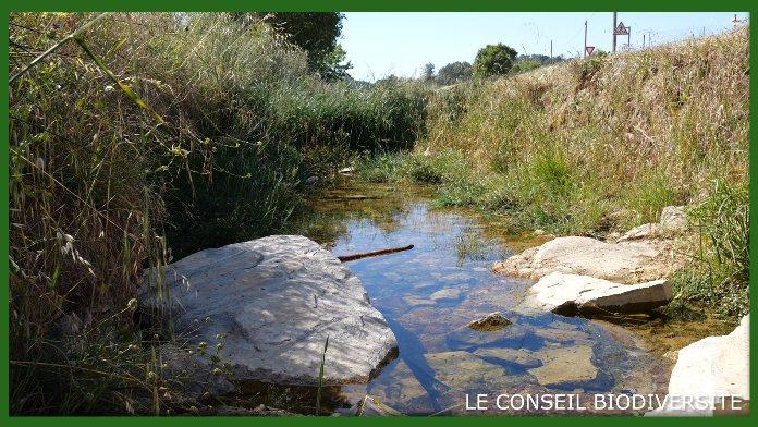 (vidéo) Conseil Biodiversité : Comment protéger les zones humides ?