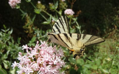 Sortie découverte de la nature : Les fées papillons…